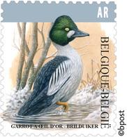Belg. 2020 - Garrot à Oeil D'or ** Brilduiker**  (timbre Pour Accusé De Réception) BUZIN (Bericht Van Ontvangst) - Belgium
