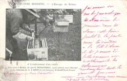 APICULTURE MODERNE L'élevage Des Reines, L'enlèvement D'un Cadre - Agriculture