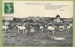 12 Aveyron Aubrac Vu Du Couderc Vaches Env Saint Chély Rodez - France