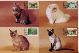 Venda Mi# 250-3 Maxikartensatz - Fauna Cats - Venda