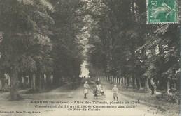Ardres - Allée Des Tilleuls, Plantée En 1766 - Ardres
