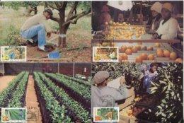 Ciskei Mi# 141-4 Maxikarten-Satz - Flora Citrus Farming - Ciskei
