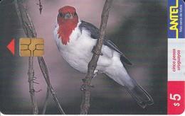 Nº 80 (CHIP NEGRO) TARJETA DE URUGUAY DE UN PAJARO CARDENAL DE 5$ (BIRD) RARO - Uruguay