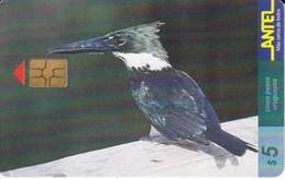 Nº 67 (CHIP NEGRO) TARJETA DE URUGUAY DE ANTEL DE UN MARTIN PESCADOR (PAJARO-BIRD) - Uruguay