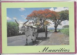 MAURITIUS  - Charette - Mauritius