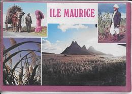 ILE MAURICE  La Canne A Sucre Principale Resource De L' Ile - Mauritius