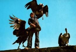 CPM - VOLERIE DES AIGLES - CHÂTEAU KINTZHEIM (67) - SPECTACLE … Edition Mage - Birds