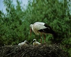 CPM - HUNAWIHR - Centre De Réintroduction Des CIGOGNES En ALSACE … Edition Mage - Birds
