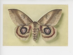 Papillon - Automeris Janus (colombie) Collection Boubée (cp Vierge N°1) - Insects
