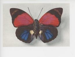 Papillon - Agrias Sardanapalus Variété Fulgens (centre Brésil) Collection Boubée (cp Vierge N°3) - Insects