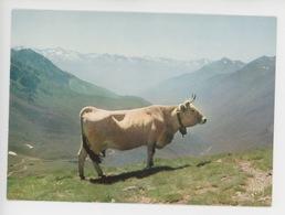 Vache Pyrénéenne (couleurs Et Lumière De France N°4609 Cp Vierge) - Cows