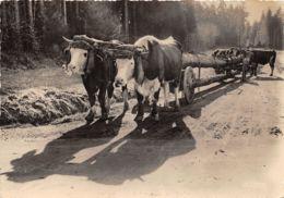 88-TRANSPORT DE GRUMES DANS LES VOSGES-N°325-D/0399 - Autres Communes