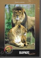 Zoo De Doué La Fontaine 49 - Lions