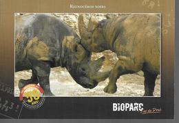 Zoo De Doué La Fontaine 49 - Rhinocéros
