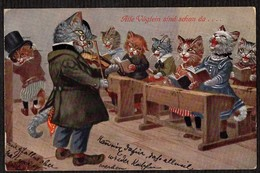 Katzen, Schule - Gelaufene AK 1910 - Chats