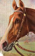 DC1199 - Motiv Pferd (Beschädigt) - Caballos