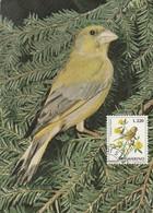 Carte Maximum - Oiseaux - San Marino - Carduelis Chloris - Moineaux