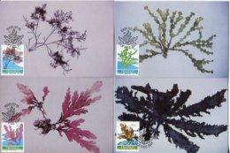 Transkei Mi# 214-7 Maximum Kartensatz - Flora Seaweed - Transkei