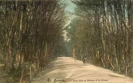 026 865 - CPA - Belgique - Bethane - Sous-bois De Bethane à La Gileppe - Limbourg