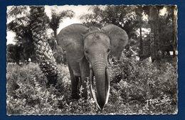 A.E.F. Faune Africaine: Un Jeune éléphant - Otros