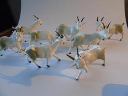 8 White Goats Chevres Giessen Ferme Farm Bauernhof Circus Circus Zoo - Zonder Classificatie