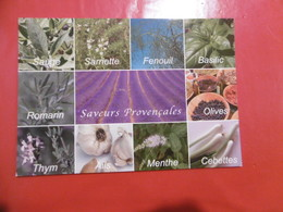 Plantes - Sauge, Sarriette, Fenouil, Basilic, Romarin, Olives, Thym, Ails, Menthes, Cebettes - Heilpflanzen