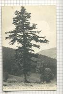 273. GÉRARDMER. — Forêt De L'Urson Et Col De Lapois. - LL. /171 - France