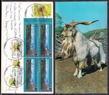Argentina - 2020 - Carte Postale - Chèvre - Fattoria