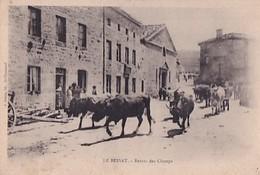 LE BESSAT     RETOUR DES CHAMPS      TROUPEAU DE VACHES - France