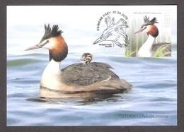 Bird Of The Year - The Great Crested Grebe  Estonia 2020 Stamp Maxicard Mi 985 - Estonia