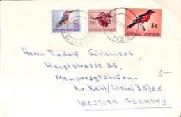 [407531]B/TB//-Afrique Du Sud  -  Animaux, Oiseaux, Buffle - Birds
