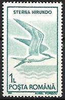 Romania - MNH 1991 :     Common Tern  -  Sterna Hirundo - Seagulls