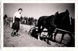 Photo Originale Monde Paysan & Cultivateurs Avec Attelage Cheval De Trait & Labours Avec Récolte Ou Plantations 1930/40 - Métiers