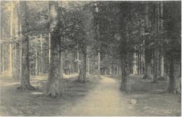 Cpa 1908 Petite Espinette - Sentier Vandenbosch - Hôtel De La Forêt De Soignes, R. Vandenbosch - Uccle - Ukkel