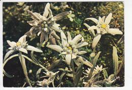 JOILES FLEURS DE FRANCE, EDELWEISS, Ed. YVON 1974 - Flowers
