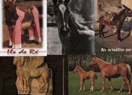 """Lot De 20 Cartes Postales Modernes - Thème """" Les Chevaux Et Anes """" - 4 Can. - Postcards"""