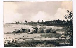 HUN-58   DOLMEN At HAVELTE - Dolmen & Menhirs