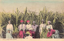 Jamaica - Sugar Cane Cutters - Publ. A. Duperly & Sons9 - Jamaica