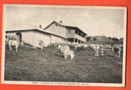 ZAC-35 Chalet D'alpage Et Sommet Dent De Vaulion. Troupeau De Vaches Et Veaux.Jura Vaud. ANIME. Deriaz 101, Non Circ. - VD Vaud