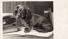 ANIMAUX 231 : Chien Teckel Qui Lie Un Livre: édit. Amag N°  68075 - Hunde