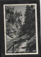 AK 0478  Gutenstein - Klamm Im Klostertal / Verlag Ledermann Um 1950 - Gutenstein