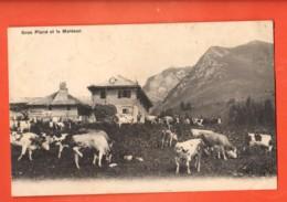 ZAD-18  Alpage De Gros Plané Et Le Moléson. Troupeau De Vaches Fribourgeoises. Sceau Aleuve1907.Papier Fin Détaché - FR Fribourg