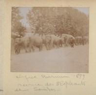 050520 - PHOTO ANCIENNE 1899 - 17 SAINTES  Cirque Barnum Revue Des éléphants - Spectacle - Saintes