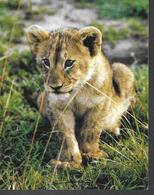 Zoo De La Palmyre 17 - Lions
