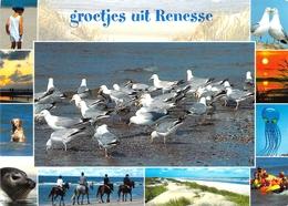 Renesse - Multivues - Renesse
