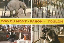 ANIMAUX Dans Les Zoo  Toulon Zoo Du Mont Faron - Sonstige