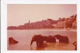 PHOTO 06 MENTON Elephants Dans Le Baie De Menton Fevrier 1979 - Menton