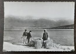 Carte Postal Timbrée - La Corse - Ile De Beaute - Calvi - Calvi