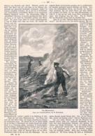 500 Oldenburg Moorgebiet Torf Heide Moor Artikel Mit 6 Bildern 1898 !! - Basse Saxe
