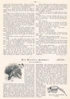 506 Hamburg Nordsee Hummer Fischfang Artikel Mit 4 Bildern 1898 !! - Other